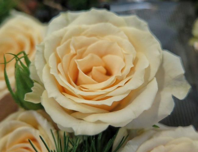 floral_garage_650_2